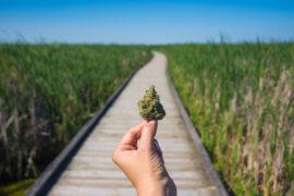 Facing Marijuana Charges Westfield NJ help near me