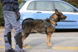 Dog found drugs in my car Cranford top attorneys