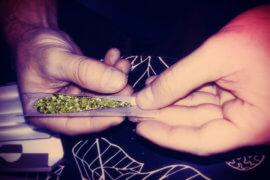 Need a Westfield Marijuana Defense Attorney